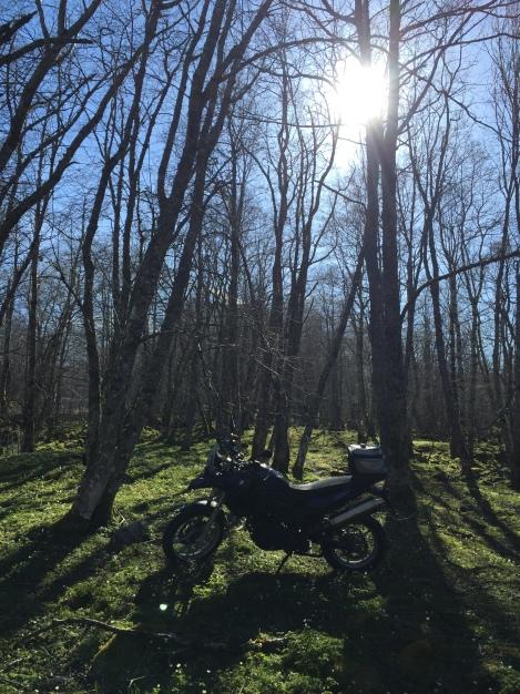 SkogsMystikk