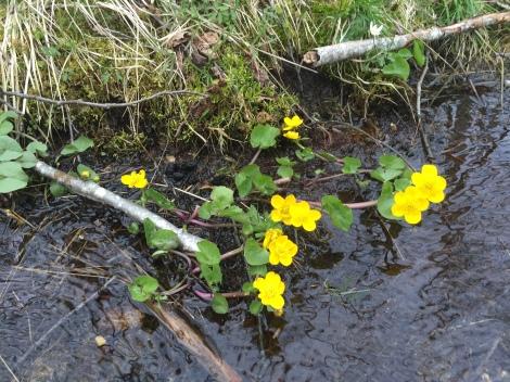 Blomster i vann